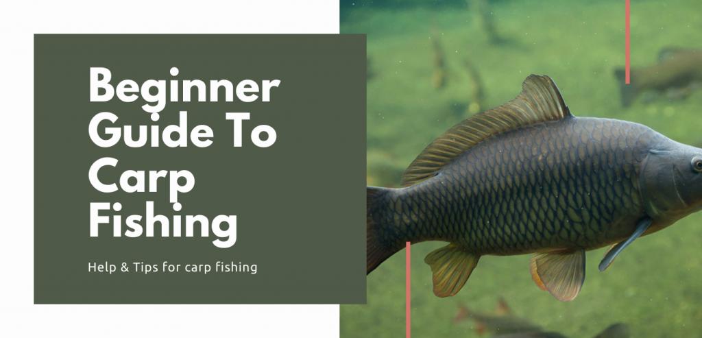Beginner Guide to Carp Fishing